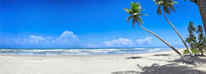 Tropical Beach Palm Trees1